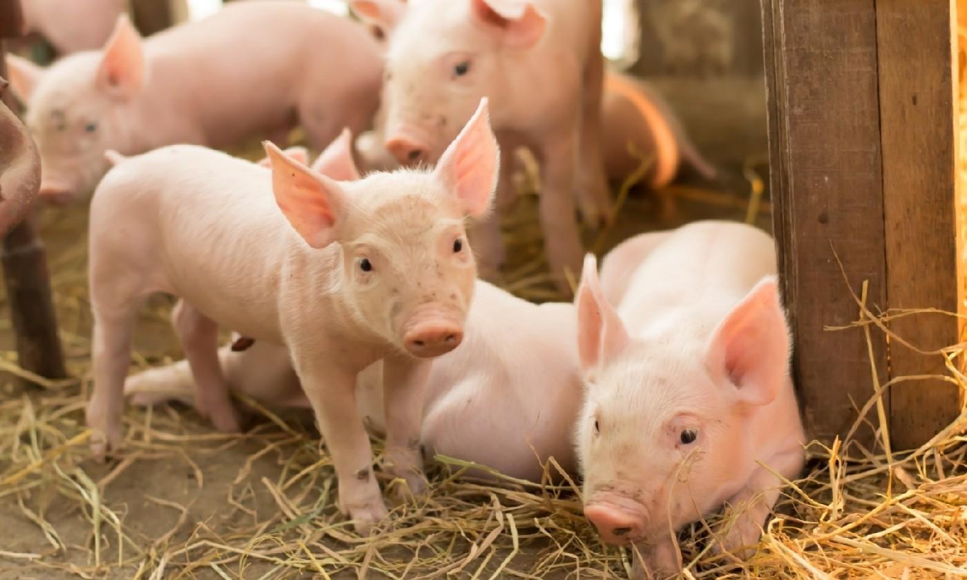 讓您的小豬贏在起跑點